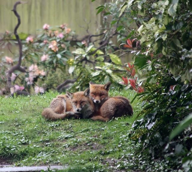 Redhill Garden/Wildlife Centre - The Three Amigos