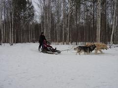 Dog sledding near Yekaterinburg Siberia9