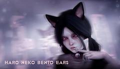 HARO Bento / Animesh Neko Ears