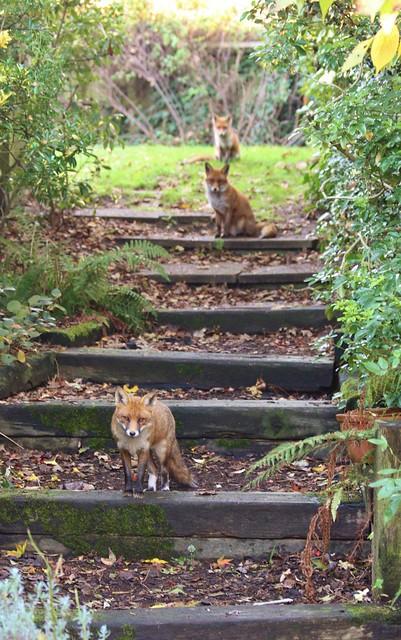 Redhill Garden/Wildlife Centre - The Pecking Order