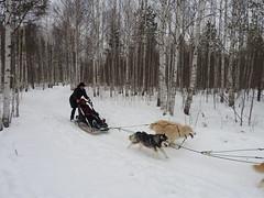Dog sledding near Yekaterinburg Siberia5