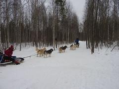 Dog sledding near Yekaterinburg Siberia7