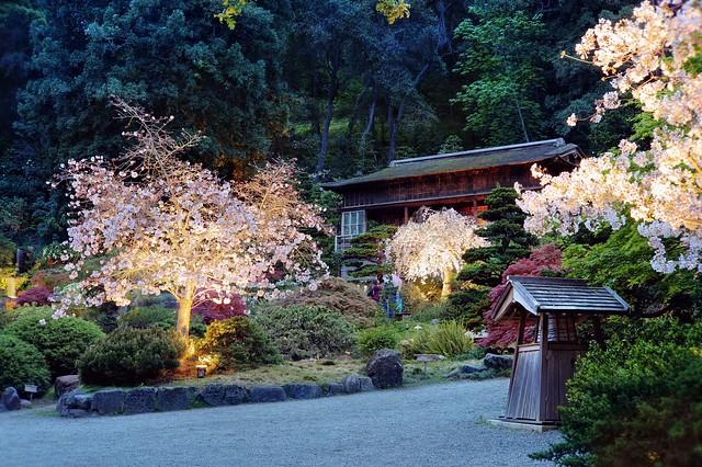 Hanami at Hakone Gardens