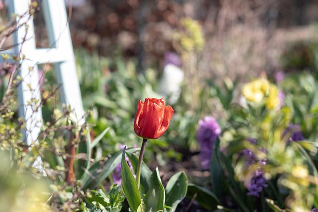 Holme Gardens in March 4