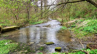 Luttergrund with small streams