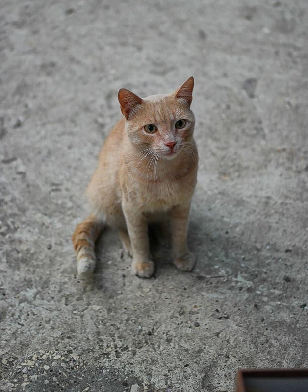 Рыжий кот у подъезда