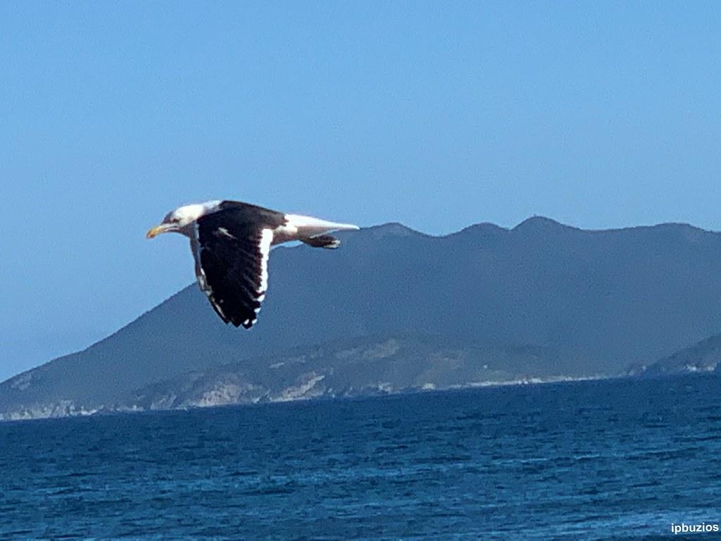 Praia do Forte Pássaros 10032020 foto 11