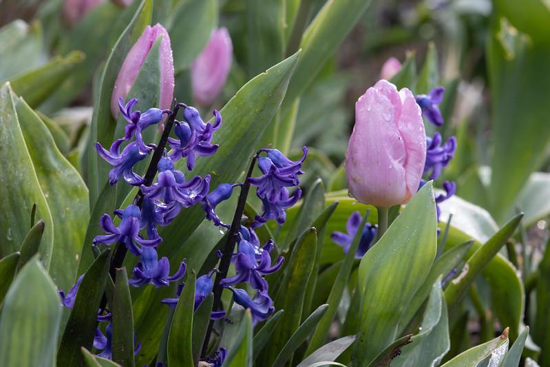 Holme Gardens in March 11