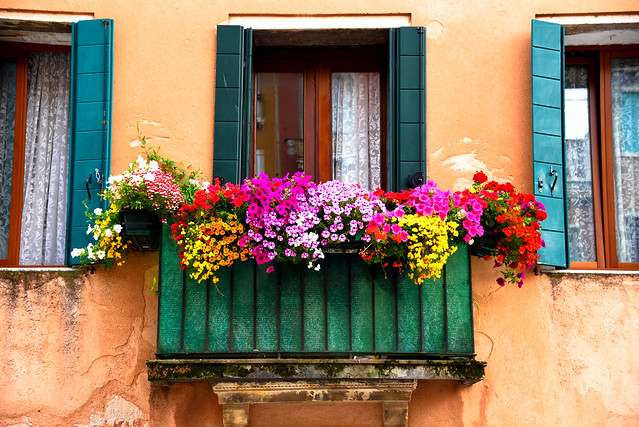 Venezia via Garibaldi - Fiori