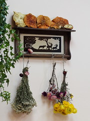 An old shelf made in 1941 with Amanitas and dried colorful flowers