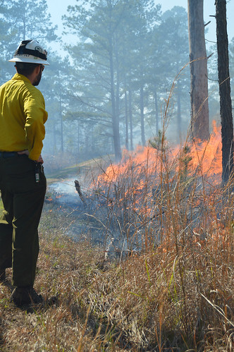 Firefighter doing a controlled burn.