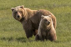 Grass Munching Momma