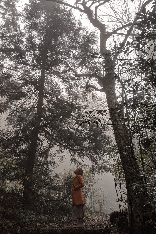 08hakone-japan-ancientcedaravenue-travel