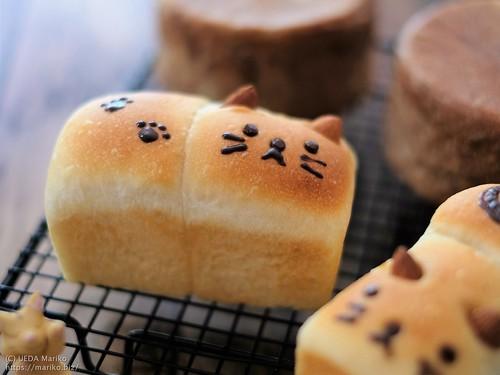 にゃんこミニ食パン 20200315-DSCT4009 (2)