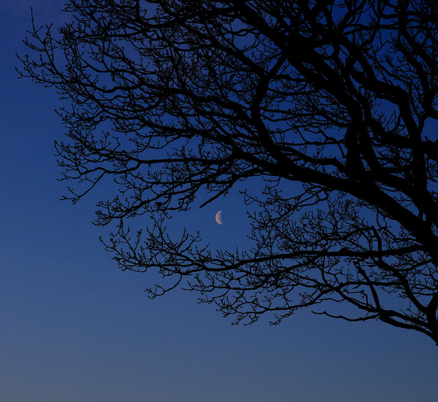 Crescent Moon through the branches