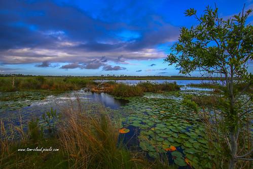 landscape outdoors nature mothernature marsh savanna lilypads water trees grass skybluesky clouds cloudy weather grasses hawksbluff jensenbeach florida usa scenery