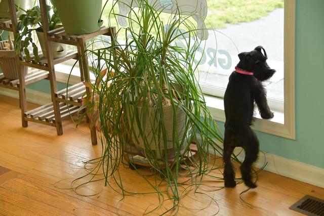 Dogs Aroo Hu Ruff Life Grooming 20200316_0070
