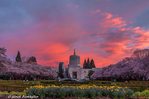 sunset cherryblossom oregoncapitol salemor 20200315 img7400pedited1