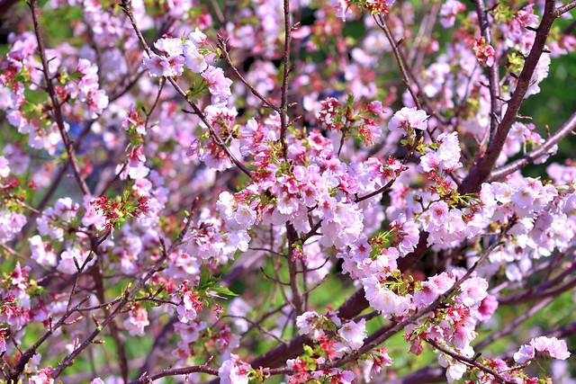 DSC_2629_00001-春去春又回