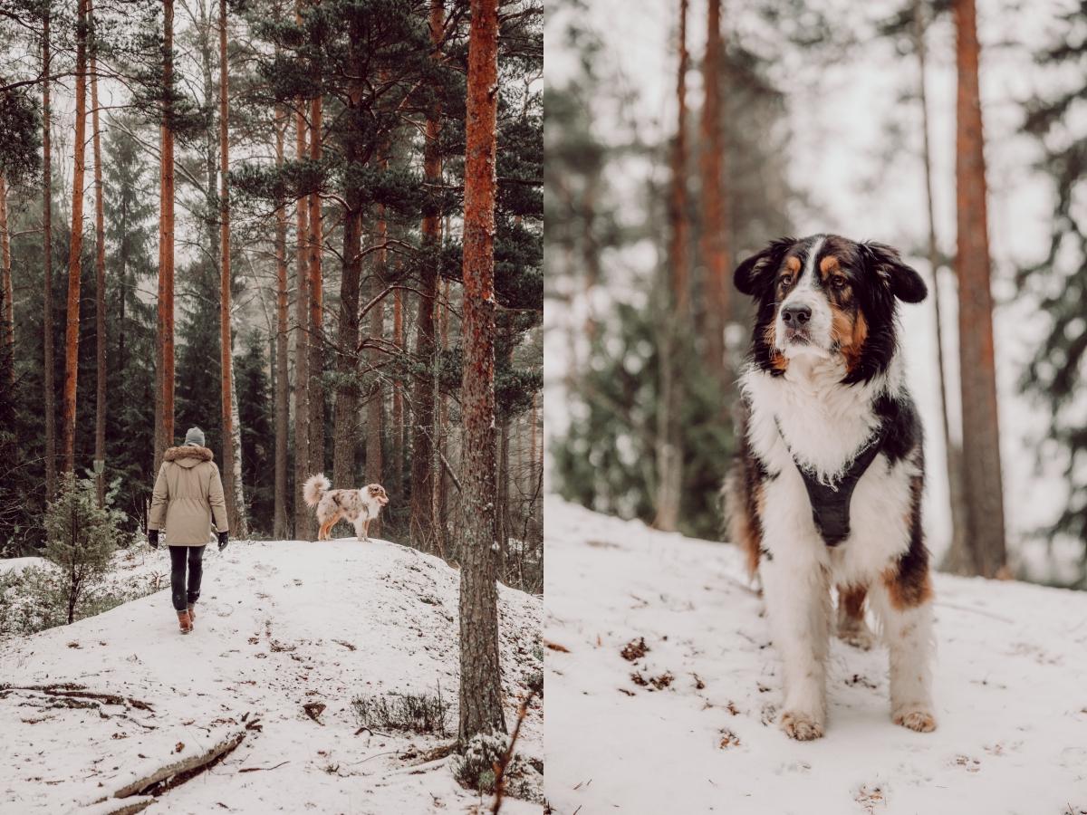 östersundomin koirametsä-2-side