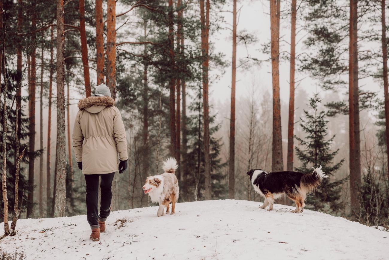 östersundomin koirametsä-4
