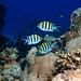 Oberfeldwebel Fisch, Egypt Safaga
