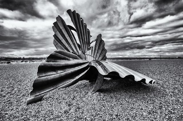 Scallop shells on the seashore