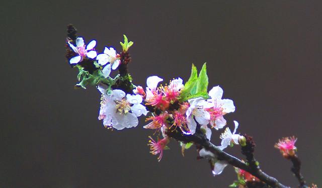 Springtime Rain