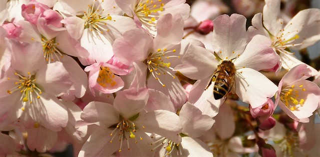 Tasting the blossom