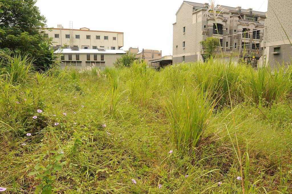 小田島氏榖精草在臺灣唯一的生育地(嘉義彌陀濕地),此生育地為私人土地。圖片來源:王偉聿