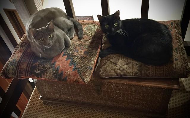 New family members