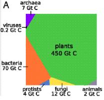 La biomassa della biosfera
