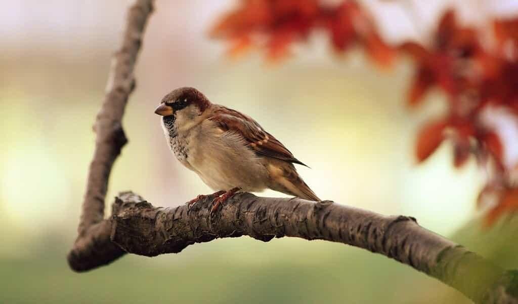 Les oiseaux sont les «canaris» du changement climatique