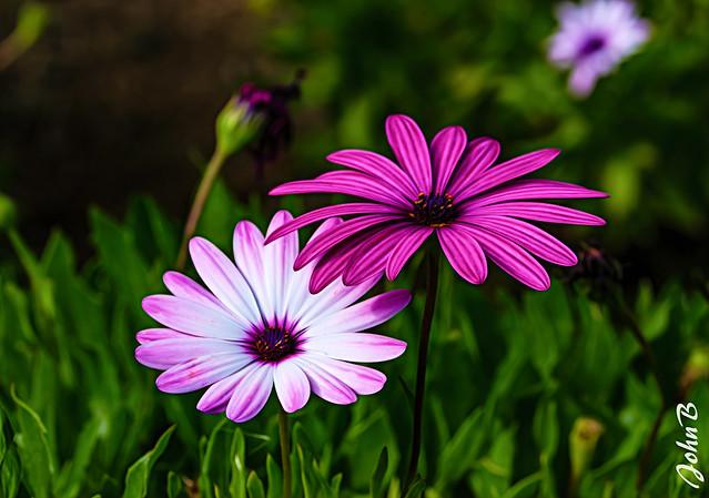 Flores de Las Garzas
