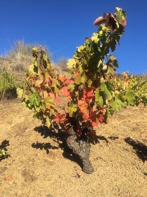 2019-10-27 Ruta de vinyes a la tardor, Circular a Porrera per Torroja i Poboleda