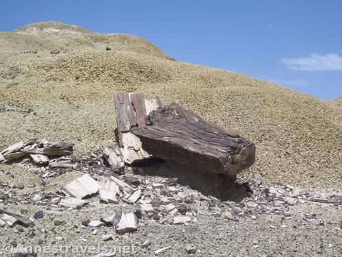 A petrified log near the King of Wings, Ah-Shi-Sle-Pah Wilderness, New Mexico