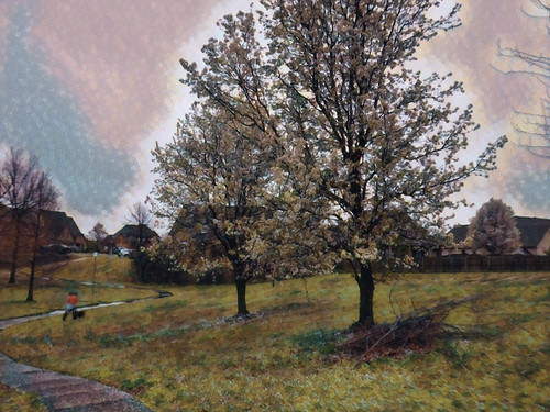 TWo pear trees impression