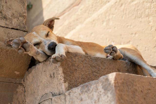 Sleeping Stray, India