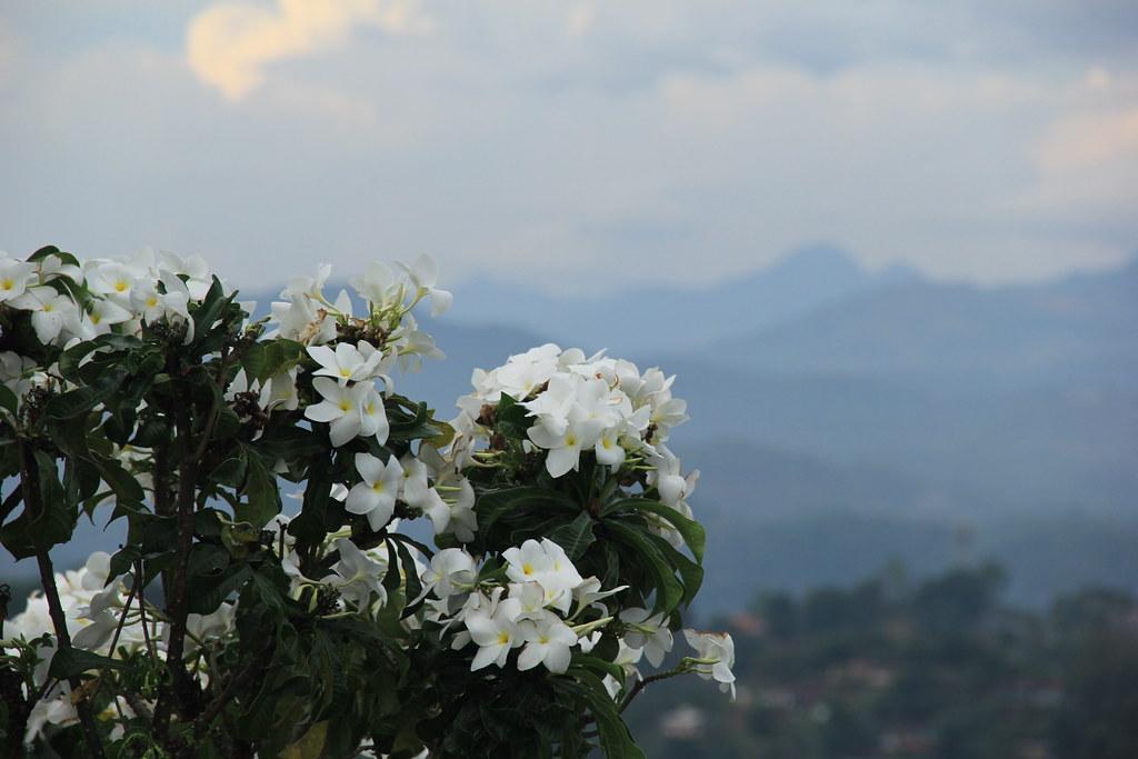 Views from Sri Maha Bodhi Temple, Kandy