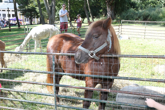 Petting Zoo from Bronx Equestrian