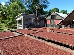 Grenada - Dougaldston Spice Estate