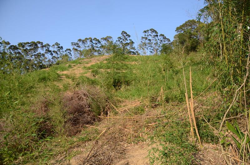 紅子坑山(甕子坑山)山頂砍伐地