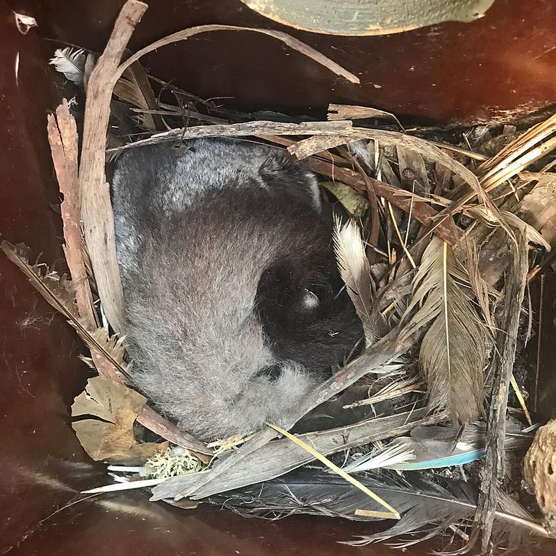 Friends - glider in tuan nest