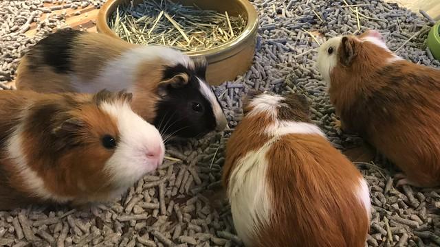 Small Animal Hotel
