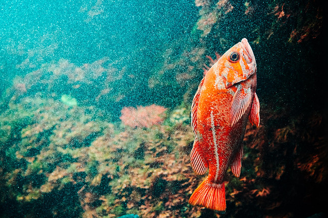 fish in red ;)