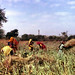 Travelogue: Rajasthani Farm Workers