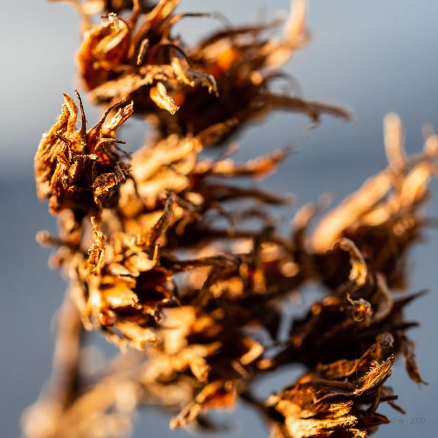 Autumnal Flowers, Spring's Light...
