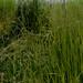 Spring's grassy brume