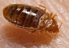Want to get rid of Bedbugs?