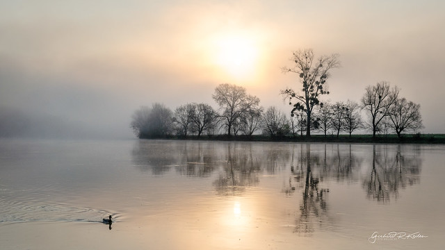 Sunrise in the morning mist and the lonely duck